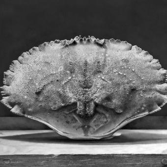 Crab Shell #1